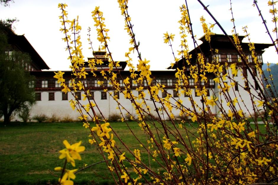 d Tashichhoe Dzong (4)