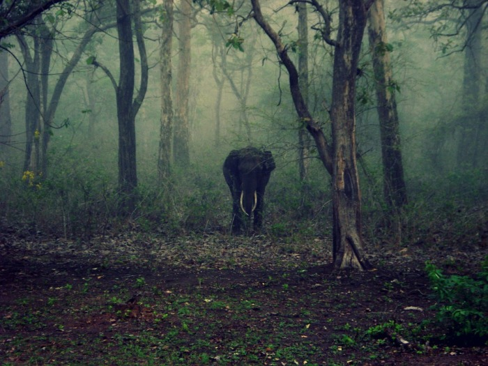 elephant-185578_960_720
