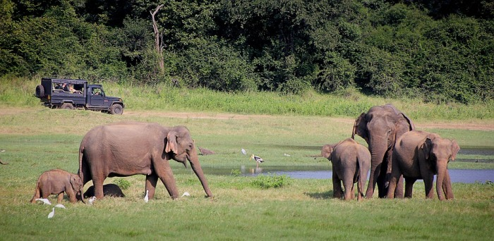 elephant-2131326_960_720