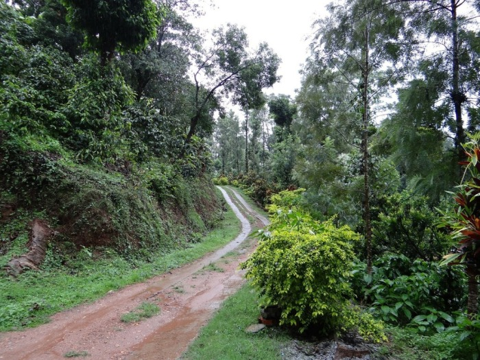 trail-345401_1280