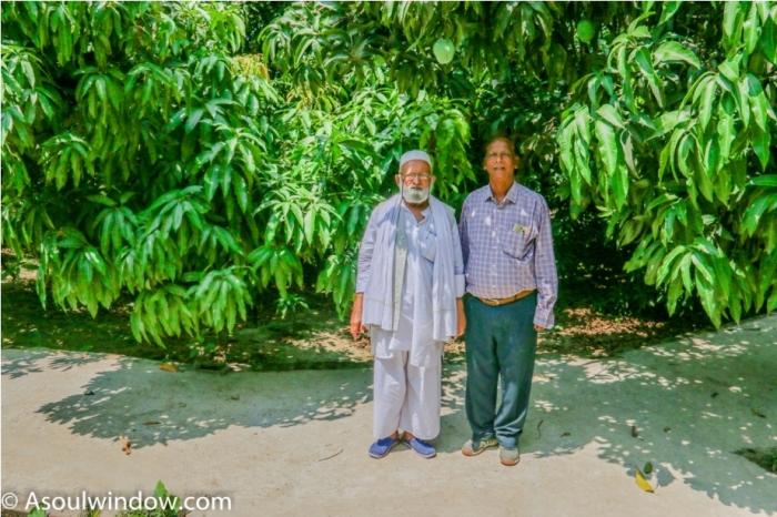 Dussehri Mango Tree Malihabad, kakori, Lucknow. India Padma Shree Kaleem Ullah Khan