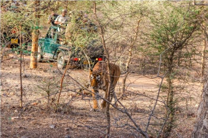Kumbha T34 Tiger safari, Ranthambore National Park, zone 6 Rajasthan, Incredible India (5)