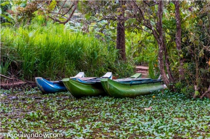 Hiriwadunna Village safari Dambulla Sigiriya Sri Lanka (13)