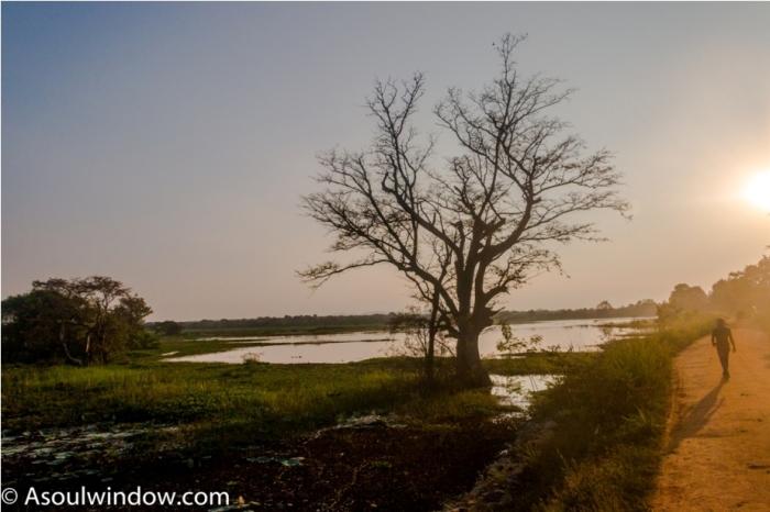 Hiriwadunna Village safari Dambulla Sigiriya Sri Lanka (2)