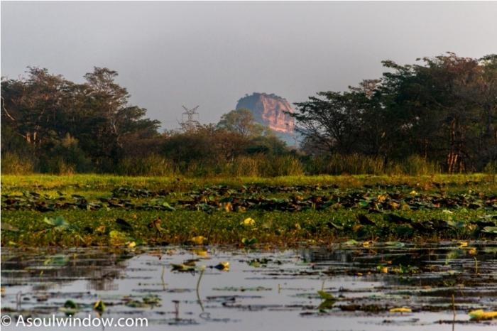 Hiriwadunna Village safari Dambulla Sigiriya Sri Lanka (4)