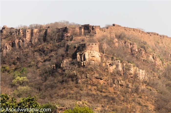 Tiger Ranthambore fort Rajasthan India Wildlife