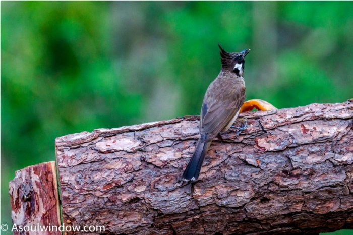 Sattal Bhimtal Nainital Uttarakhand Birdwatching India