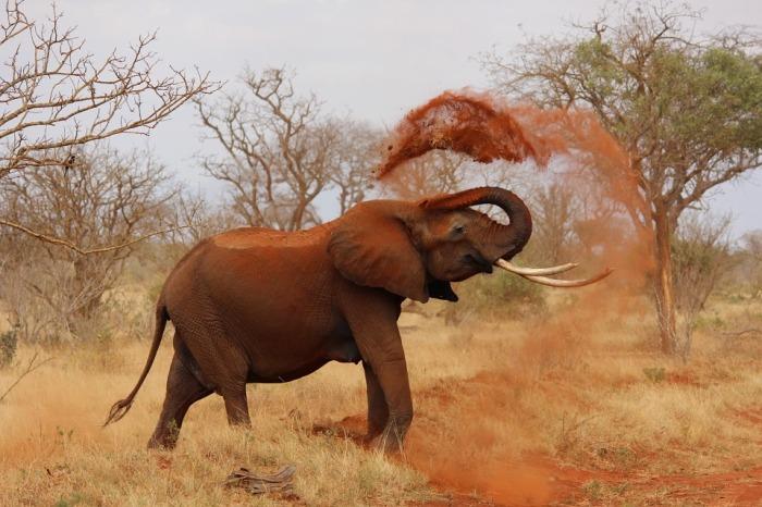 African elephant-111695_960_720