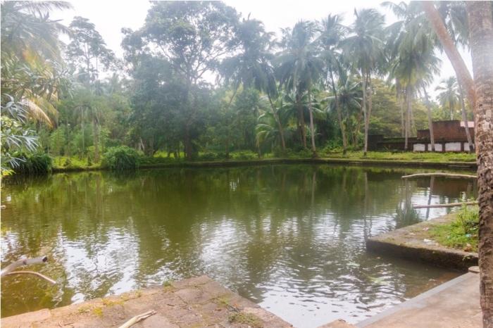 Raghurajpur Heritage Village Pattachitra Puri Odisha pond