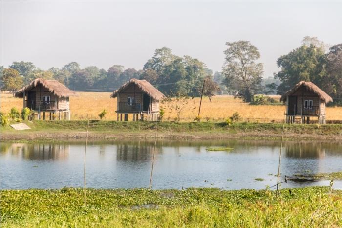 Bamboo Homestay Majuli River Island Assam India (4)