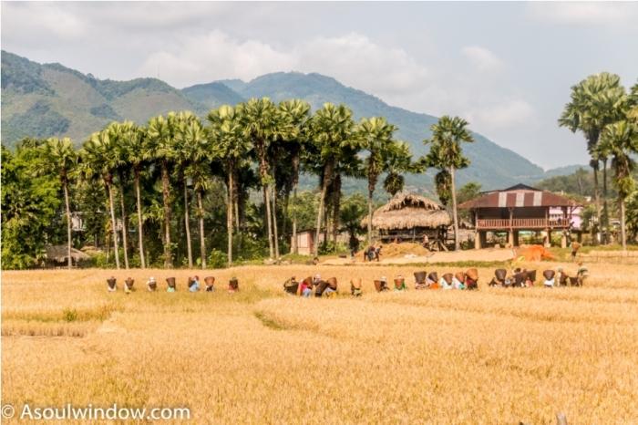 Basar Confluence Bas Con Arunachal Pradesh India Harvesting (2)