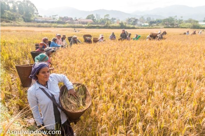 Basar Confluence Bas Con Arunachal Pradesh India Harvesting