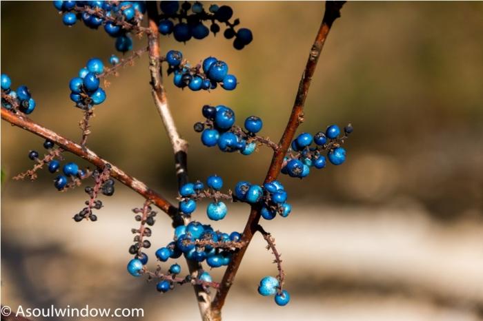 Berry Adventure At Mechuka Arunachal Pradesh India