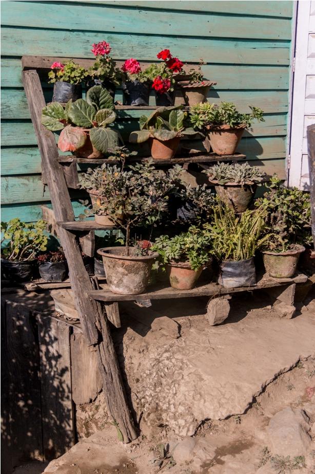 Garden Ukhrul Manipur North East India
