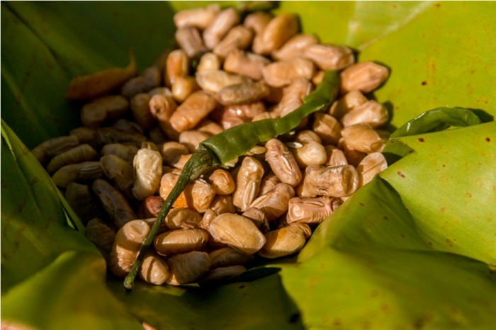 Hornbill festival Nagaland India Millet