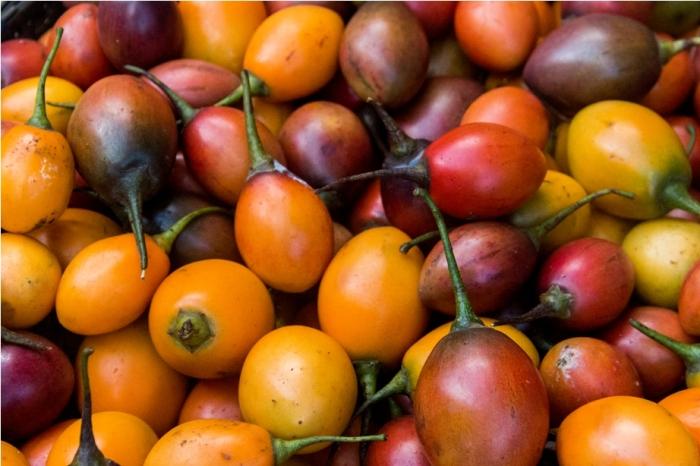 Tomatoes of Nagaland India