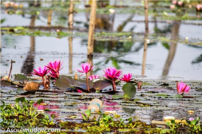 Alleppey Alappuzha. Vembanad lake Backwaters Kerala India (4)