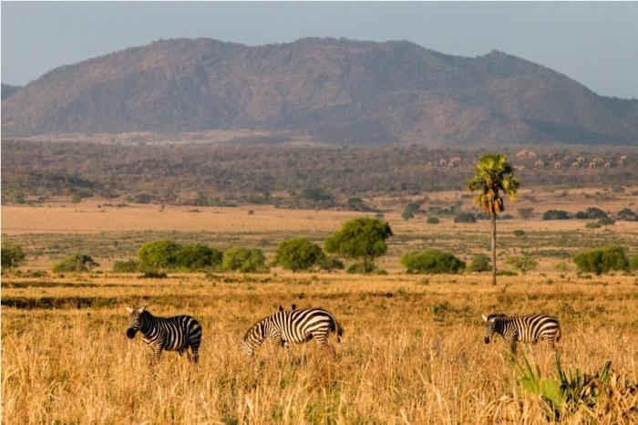 Kidepo National Park Uganda Africa (39)