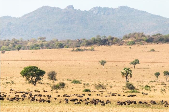 Landscape Kidepo National Park Uganda Africa (2)