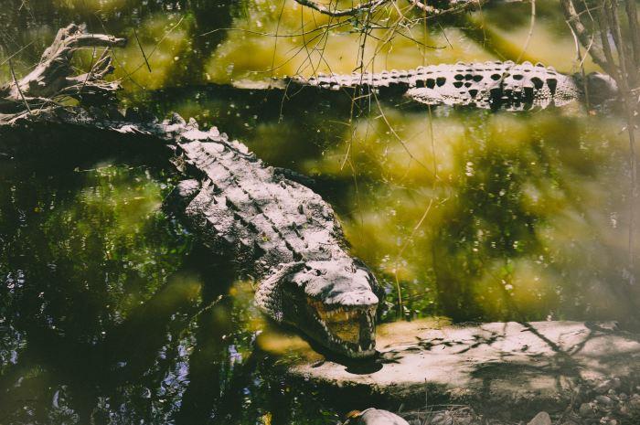 Udawalawe National Park Sri Lanka Jeep Safari Crocodile