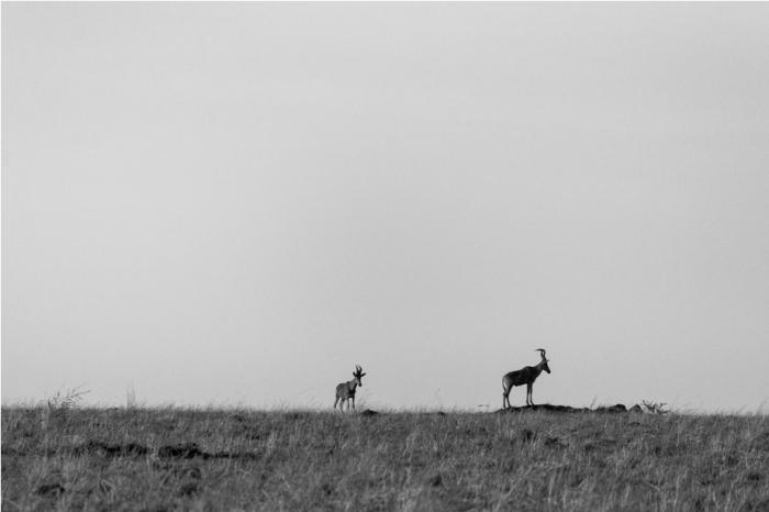 Hartebeast Kidepo National Park Uganda Africa (54)