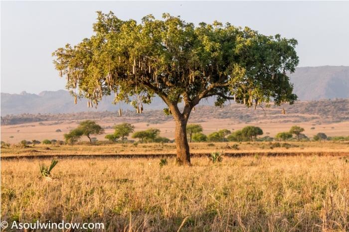 Kidepo National Park Uganda Africa (13)