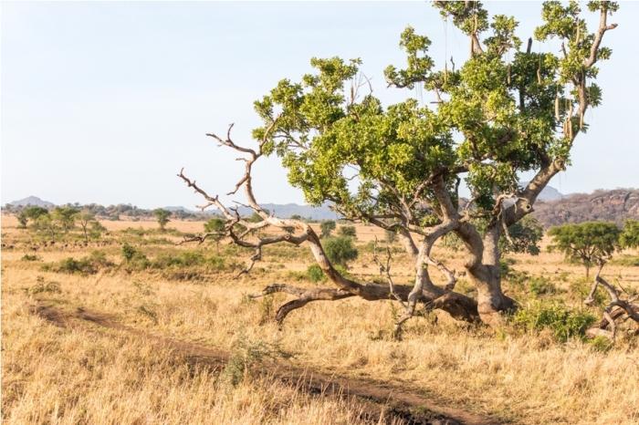 Kidepo National Park Uganda Africa (14)