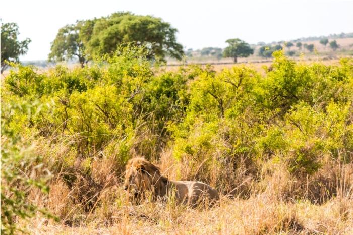 Kidepo National Park Uganda Africa (9)